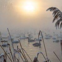 Холодный январский закат :: владимир