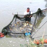 Лов рыбы на искусственных озёрах :: Николай Волков