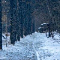 Аллея в снегу. :: Василий Ярославцев