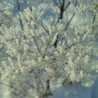 Зимний этюд (3) :: - Ivolga