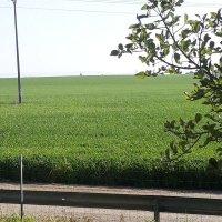 Травы травы...... :: Герович Лилия