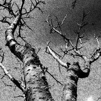 Дерево. :: Анфиса