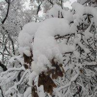 После снегопада.. :: Зинаида