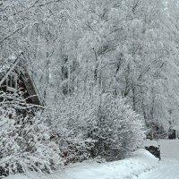 Сегодня, снега добавилось :: Viacheslav Birukov