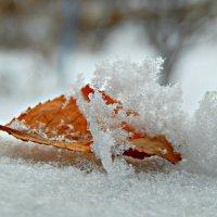 Тихо падал белый снег... :: ЛЮБОВЬ ВИТТ
