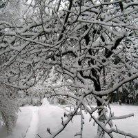 Зимняя мозаика :: Ольга Довженко