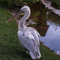 Важный птиц :: Владимир Максимов