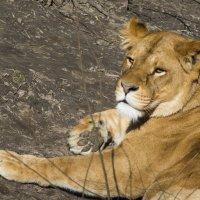 Царица отдыхает... :: Тамара Бедай