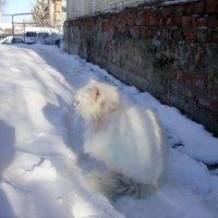 старый и больной кот ждёт весну... :: Галина Флора