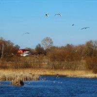 Весна на озере :: Елена Макарова