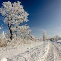 Зимний бархат. :: Владимир M