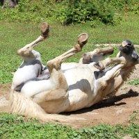 Там, где конь валялся... :: Светлана Попова