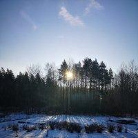 Утро февральское :: Инга Энгель