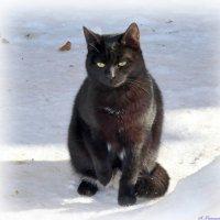 Февраль уже немного весел и скоро кончится зима, тоска уйдет и через месяц кошачий крик пронзит дома :: Андрей Заломленков