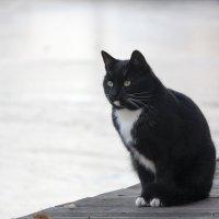 Осенний кот. :: Alexandr Gunin