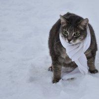 Кот на прогулке :: Наталья Жукова