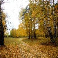 На ковре их жёлтых листьев... :: Анна Суханова