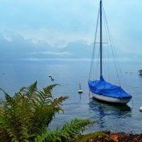 зима на Женевском озере :: Elena Wymann