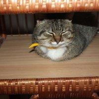 котик Тихвинского Успенского мужскогомонастыря :: Сергей Кочнев