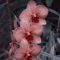 Красивая Орхидея! :: Светлана Пивоварова