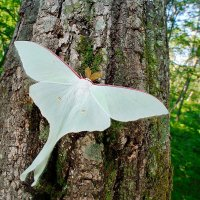 Бабочка :: Татка Давыдова