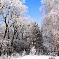 Зимний денек :: владимир тимошенко