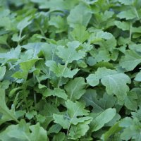 Сочная зелень :: kentiya