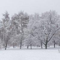 После снегопада :: Владимир Брагилевский