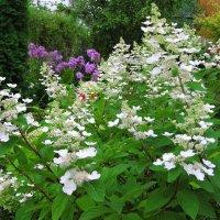 Август в саду :: Вера