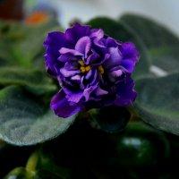 Любимый цветок :: Ирина Божко