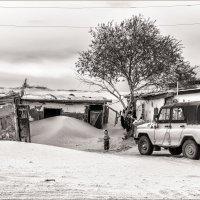 Жизнь в песках... :: Ирина Токарева