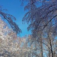Зимняя сказка! :: ирина