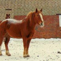 рыжая лошадь :: Юлия Ошуркова