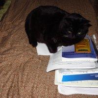 В доме физика и кошка - чуть-чуть физик :: Андрей Лукьянов