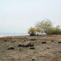 Брег туманный и пустой :: Николай Танаев