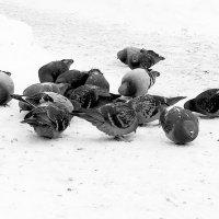 Птица мира :: Marina Pelymskaya