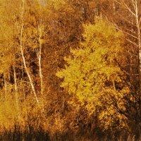 Осенняя акварель :: Ветер Странствий.орг