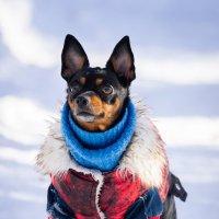 Пёс :: Alex Bush