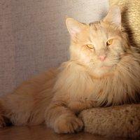 Марсель, кот :: Тахир Мурзаев
