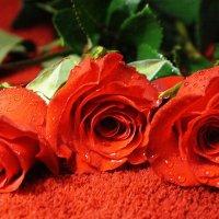 Три розы - это любовь... :: Галина Кан