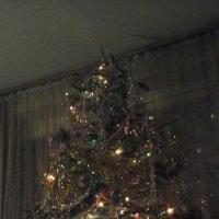 Это наша ёлка :: Дмитрий Никитин