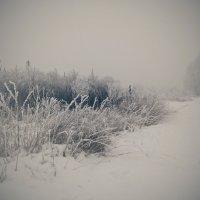 Зима :: Виктория Власова