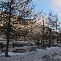 Февральское утро в спальном районе :: Наталья Герасимова