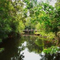 Мост в джунглях :: Александр