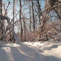 И вот уж Прохор-весновей пророчит нам весеннюю погоду.. :: Андрей Заломленков