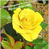 Поздравление с днем Защитника Отечества :: Tamara *