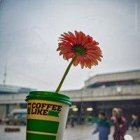 Кофе и цветок :: Александр Максимов