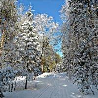 Зимний лес :: Leonid Rutov