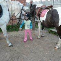 какую лошадь-то выбрать? :: Юлия Ошуркова