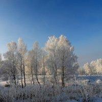 Под зимним солнышком. :: nadyasilyuk Вознюк